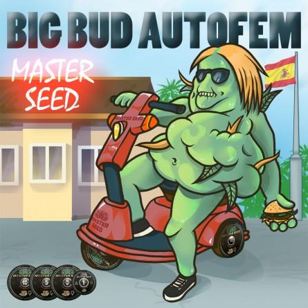 Семечко Auto Big Bud от Master-Seed Испания
