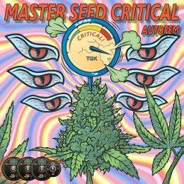 Auto Critical feminised (Master-Seed)