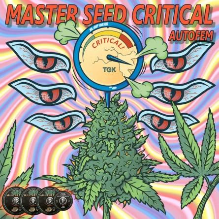 Семечко Auto Critical от Master-Seed Испания