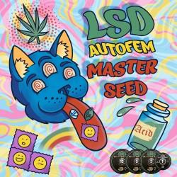 Auto LSD feminised (Master-Seed)