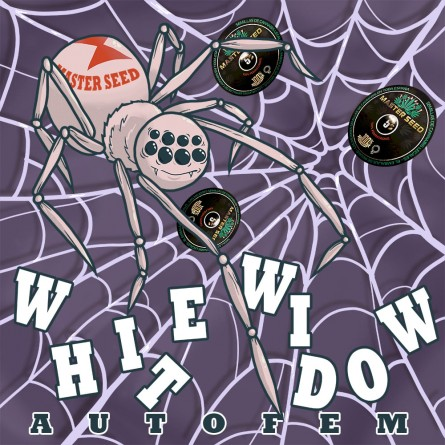 Семечко Auto White Widow от Master-Seed Испания